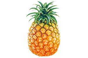 ananas Ananas proprieta effetti brucia grassi