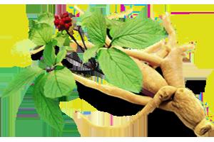 ginseng Ginseng proprieta effetti controindicazioni