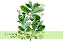 yerba-mate-pianta-215x143 Prodotti naturali per dimagrire efficaci