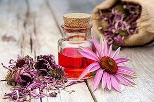 estratto-di-echinacea Echinacea proprietà controindicazioni
