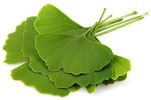 foglie-di-ginkgo-biloba Ginkgo Biloba benefici uso controindicazioni
