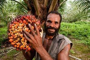 raccolto-olio-di-palma Olio di Palma fa male per la salute?