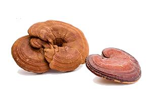 ganoderma-lucidum-reishi-3 Ganoderma Lucidum Reishi Proprieta Benefici Dimagrire